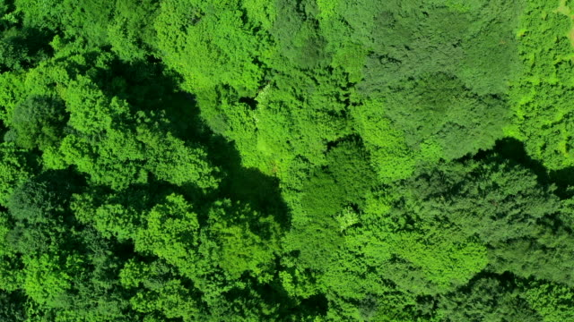 aerial shot of a green valley - water plant stock videos & royalty-free footage
