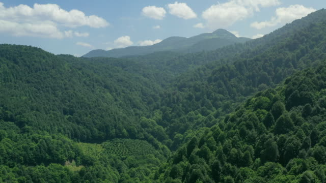 aerial shot of a green valley - sri lanka stock videos & royalty-free footage