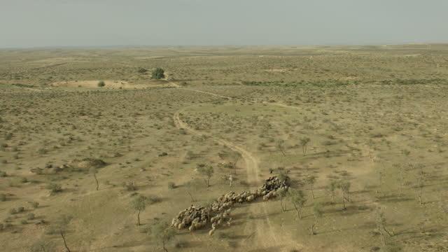 aerial shot of a herd of sheep in a forest near beer sheba - ネゲブ点の映像素材/bロール