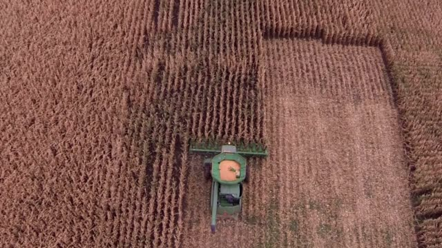 aerial shot of a john deere combine harvester as it begins to harvest a cornfield in tskilwa illinois bird's eye shots of john deere combine... - illinois stock-videos und b-roll-filmmaterial