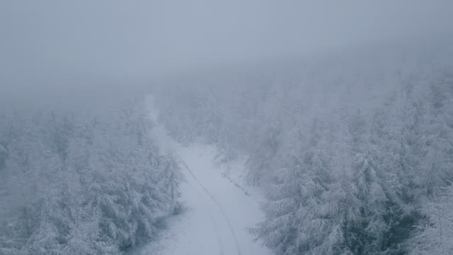 aerial shot of a misty winter road - coniferous stock videos and b-roll footage