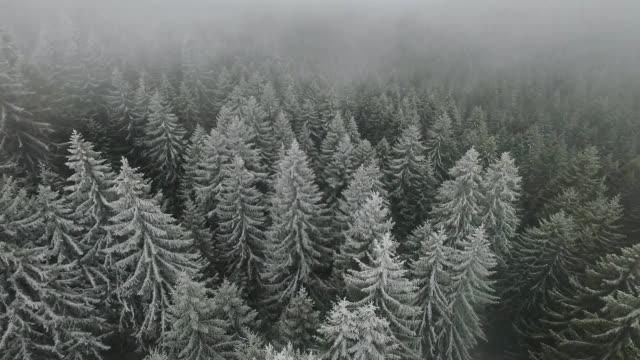 vídeos de stock, filmes e b-roll de foto aérea de uma floresta de neve - pinhal