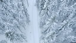Aerial shot of a snowy footpath amongst the whitened trees