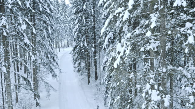 Aerial shot of a snowy forest road