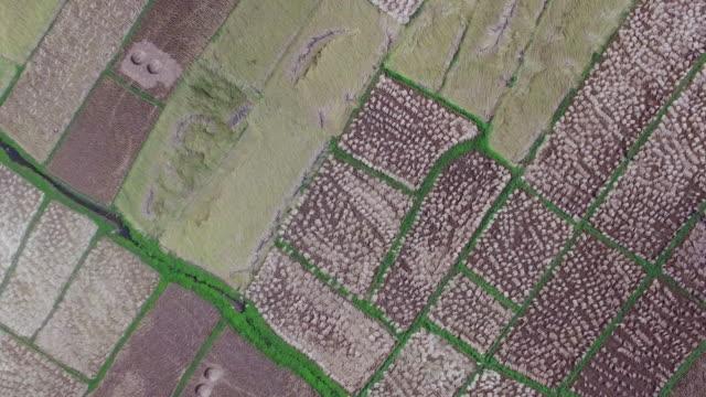 vidéos et rushes de vue aérienne de champs agricoles - verger