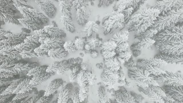 Aerial shot of beautiful frozen treetops