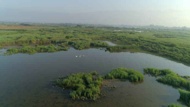 aerial shot of birds swimming in lake against sky on sunny day, drone flying over natural landscape - camargue, france - camargue stock-videos und b-roll-filmmaterial