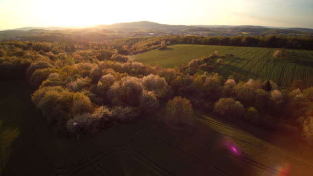 aerial shot of blossoming cherry trees in green fields and uprising forested landscape