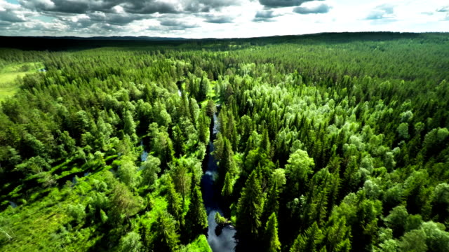 aerial shot of boreal forest in sweden - woodland stock videos & royalty-free footage