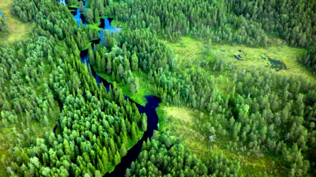 aerial shot of boreal forest with meandering river - taiga stock videos and b-roll footage