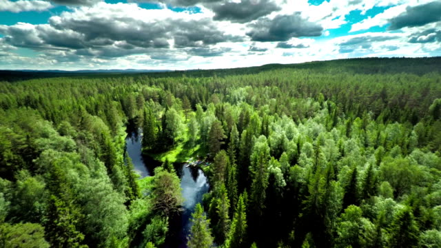 aerial shot of boreal forest with meandering river - forest stock videos & royalty-free footage