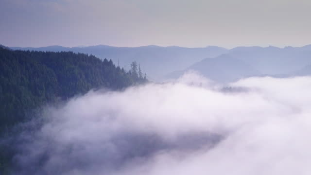 Aerial Shot of California Coastal Redwoods