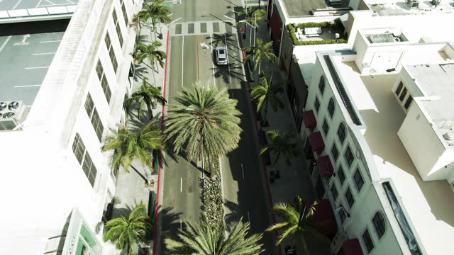 aerial shot of car by palm trees on rodeo drive amidst buildings, drone flying forward over city on sunny day - los angeles, california - rodeo stock videos & royalty-free footage