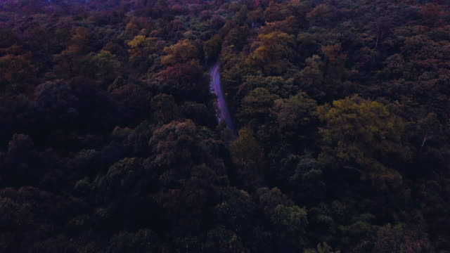 aerial shot of car on road through countryside with trees in sunset at phu hin rong kla national park. - bright colour stock videos & royalty-free footage