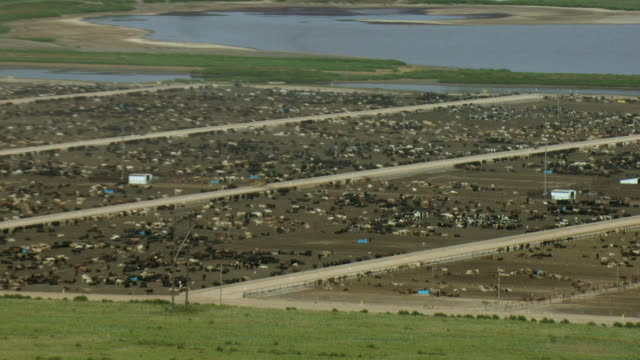 aerial shot of cattle feed lot in texas - domestic cattle stock videos & royalty-free footage