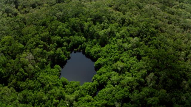 aerial shot of cenote in yucatan mexico - 北半球点の映像素材/bロール