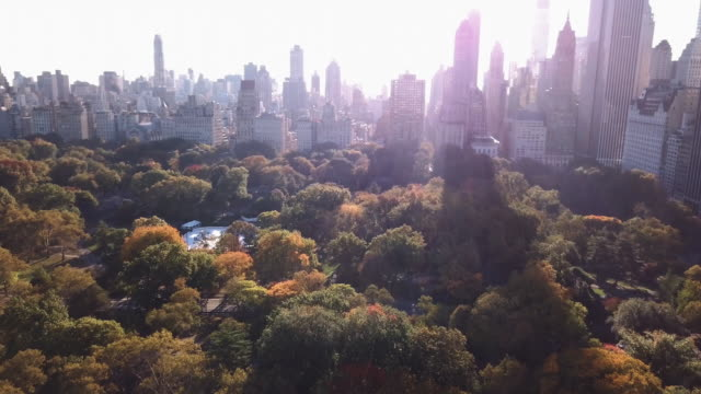 aerial shot of central park during an autumn sunrise - central park manhattan stock videos and b-roll footage