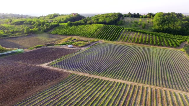 aerial shot of countryside vinyards - grape stock videos & royalty-free footage