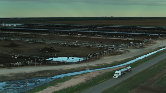 vidéos et rushes de aerial shot of cows in feedlot as milk tanker passes by - cattle
