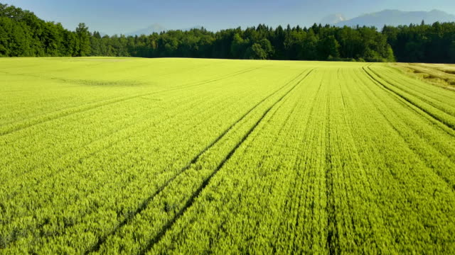 hd: aerial shot of cultivated fields - season stock videos & royalty-free footage