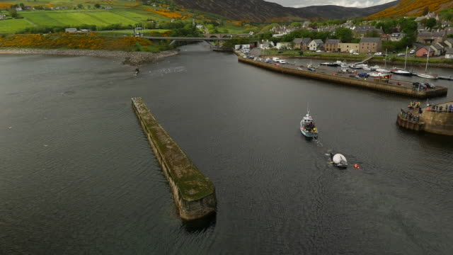 aerial shot of daed humpback whale being towed in to helmsdale harbour, scotland - rimorchiare video stock e b–roll