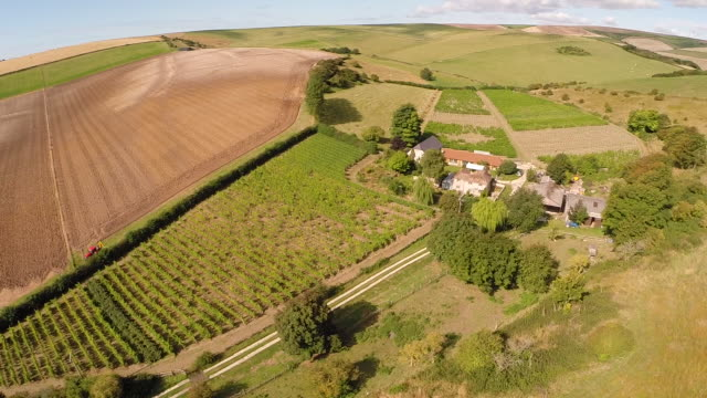aerial shot of english vineyard - sussex stock videos and b-roll footage