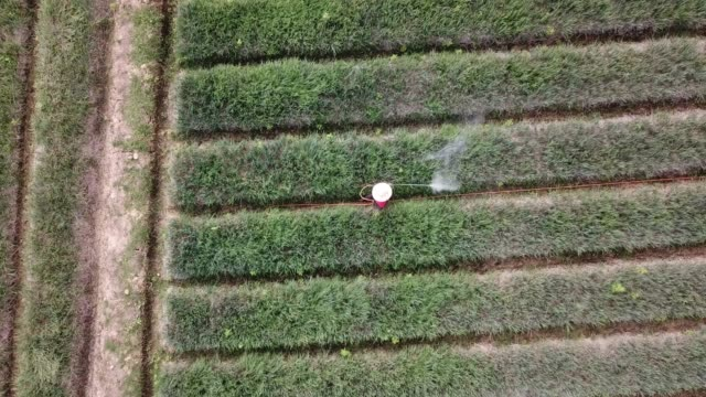 aerial shot of farmer spray the fertilizer in green agriculture field - hay texture stock videos & royalty-free footage