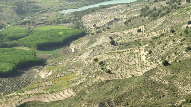T/D aerial shot of fields and poplar plantations; camera follows slope in terrain down into a valley