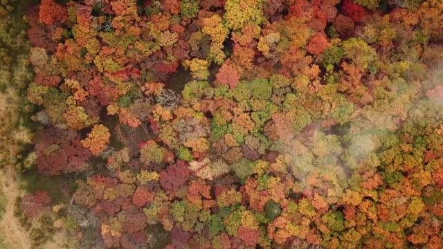 aerial shot av forest ändra färg på hösten i japan - höstlöv bildbanksvideor och videomaterial från bakom kulisserna