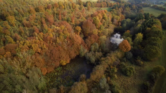 aerial shot of forest fall trees with ponds and green meadows