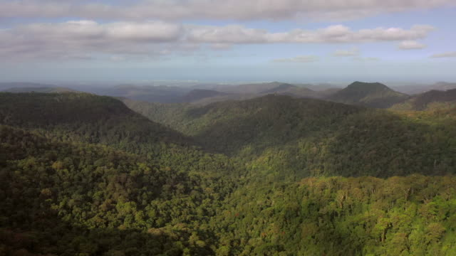 aerial shot of green trees in forest against sky on sunny day, drone flying forward over springbrook national park - national park stock videos & royalty-free footage