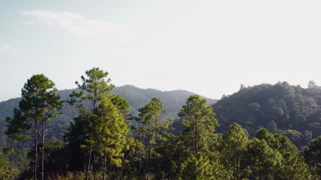Aerial Shot Of Green Treetops