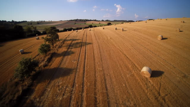 aerial shot of harvested wheat fields with line of trees and bales of straw in rolling landscape - hay stock videos and b-roll footage