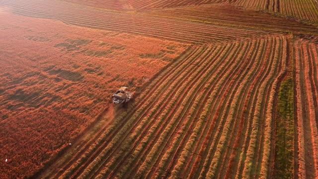 ハーベスティング小麦畑の空撮、ハーベスター - コンバイン点の映像素材/bロール
