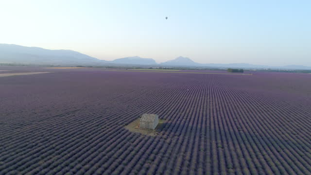 aerial shot of hot air balloon flying over lavender field, drone flying forward towards barn against clear sky during sunset - valensole provence, france - aerial stock videos & royalty-free footage
