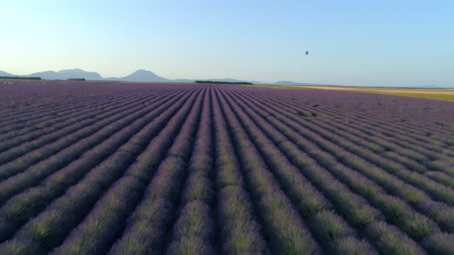 stockvideo's en b-roll-footage met aerial shot of hot air balloon flying over lavender field, drone ascending forward over flowers against clear sky on sunny day - valensole provence, france - aircraft point of view