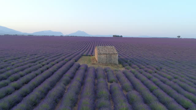 aerial shot of lavender field against clear sky, drone ascending forward towards barn on rural landscape during sunset - valensole provence, france - beauty in nature stock videos & royalty-free footage