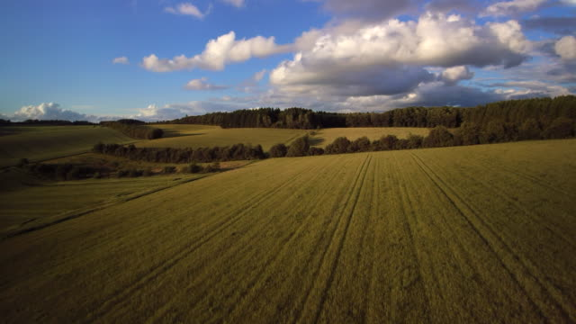 aerial shot of long green crop field and trees with puffy white clouds