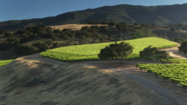 aerial shot of lush vineyards among dusty hills in monterey county, california - monterey county stock videos and b-roll footage