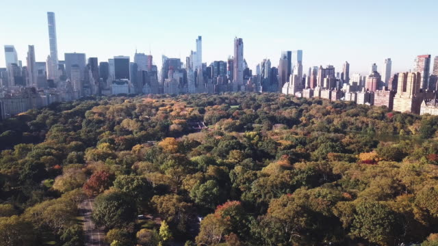 Aerial shot of New York City's Central Park on an Autumn morning
