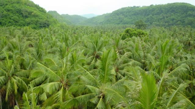 ヤシの木の空中ショット、ヌサ・ヌサペニダ、インドネシア - 熱帯の木点の映像素材/bロール