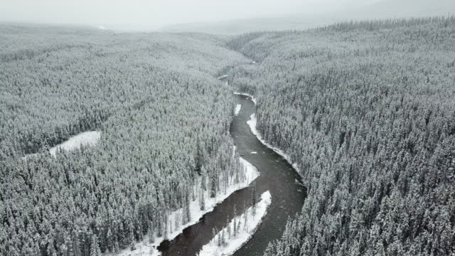 aerial shot of pine tree in winter - river stock videos & royalty-free footage