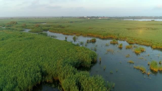 vídeos y material grabado en eventos de stock de aerial shot of plants at swamp against sky during sunset, drone flying forward over landscape - camargue, france - marisma