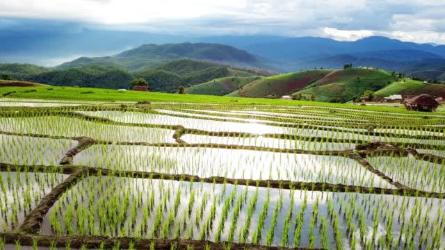 vidéos et rushes de plan aérien du champ d'agriculture de terrasse de riz de l'asie du sud-est avec le coucher du soleil - rizière