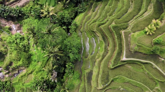 aerial shot of rice terraces - rice terrace stock videos and b-roll footage
