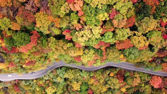 aerial shot of road way on the mountain in autumn time in japan - autumn leaf color stock videos & royalty-free footage