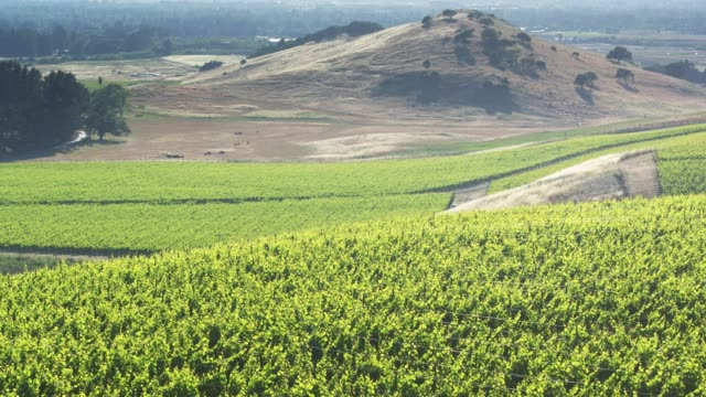 Aerial Shot of Rolling Landscape in Sonoma Wine Country