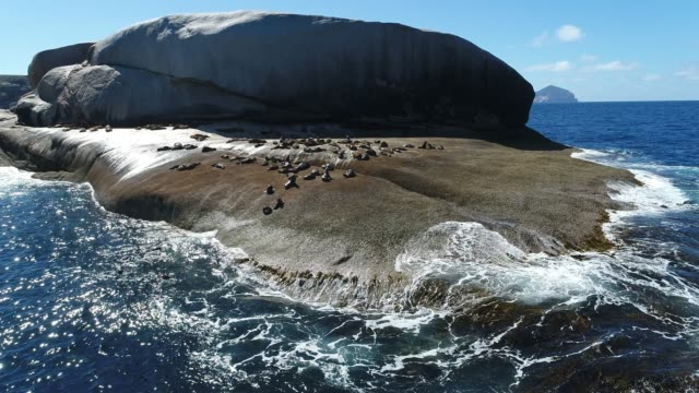 Aerial shot of seals on rock
