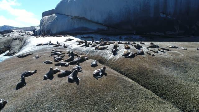 Aerial shot of seals on rocks