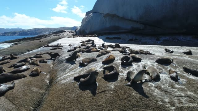 Aerial shot of seals on rocks.